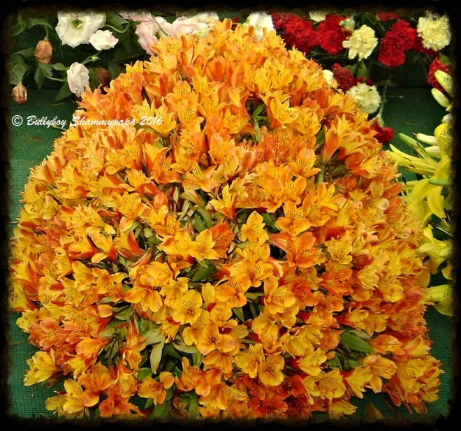 A picture of Yellow Orange Flowers