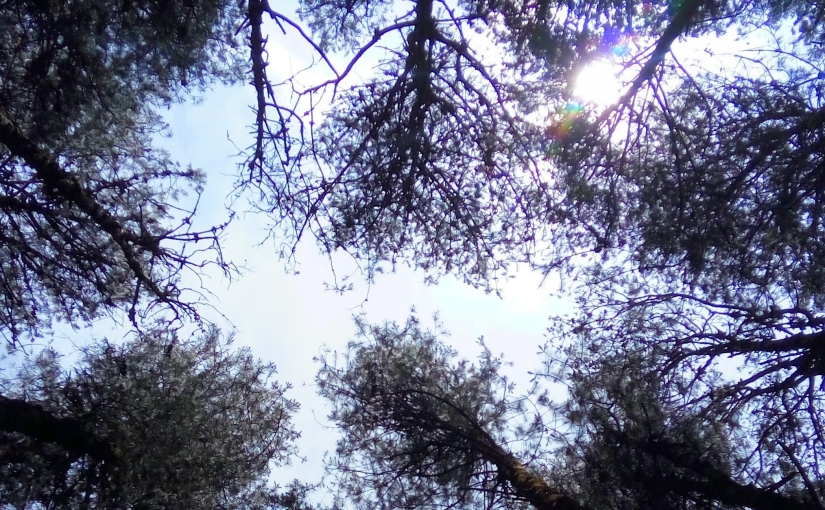 Woody Mood - A snapshot of the sky in the woods