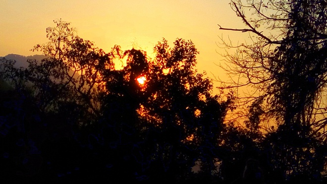 Silence is Golden - A view of Sun-rays through trees