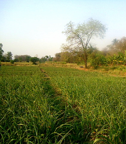 A view of an Alley in a Field