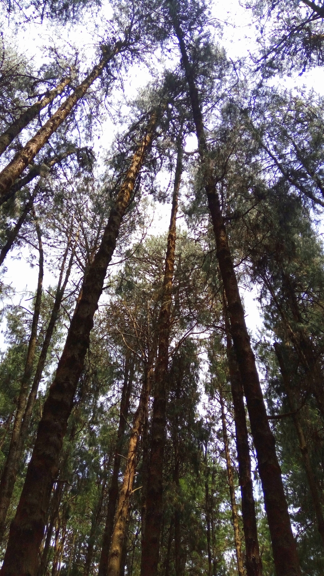 Scale Your Growth - An upward view of Scaling Heights of Towering Trees