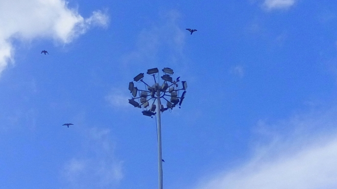 Bird - Birds in the air - A picture of a lamp post where birds perch on