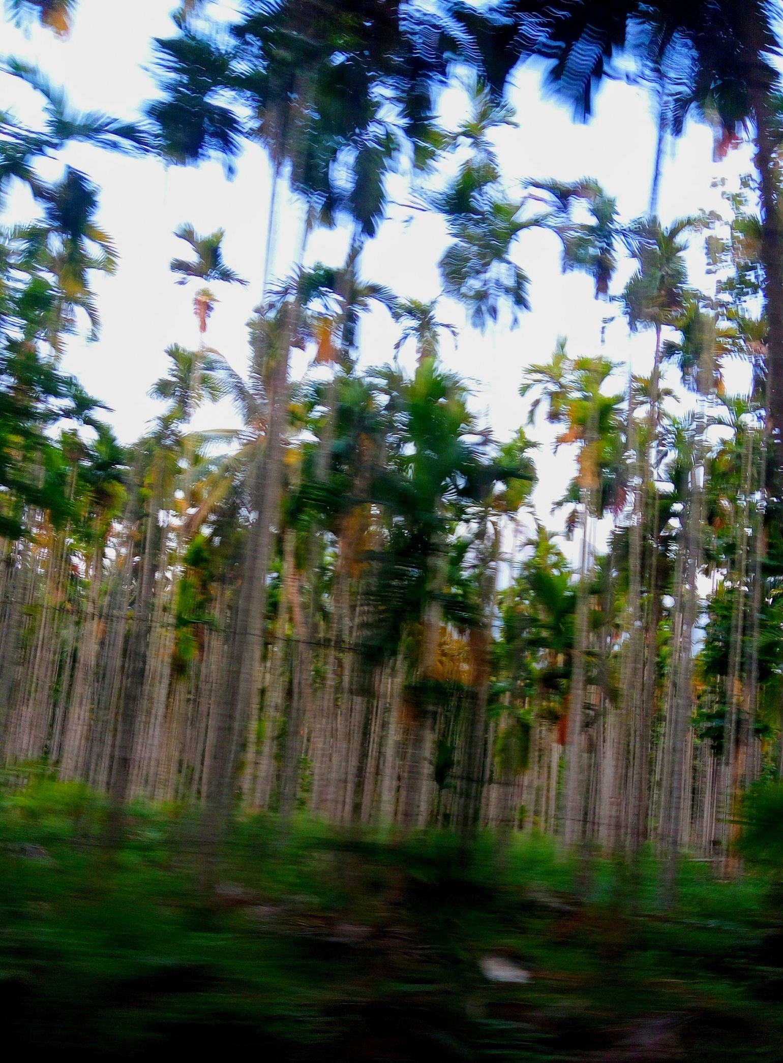 Jaragandi - A freeze of apparent movement of trees while driving
