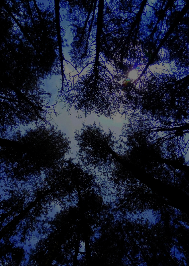 Into the Dark - A picture of the Woods at night