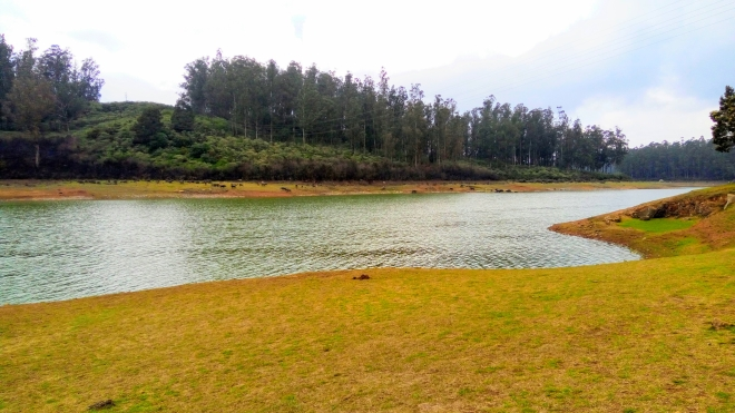 Recreation - A view of a serene lake amidst a pine forest