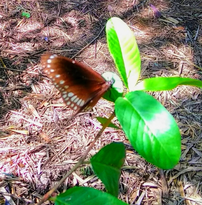 The Wilderness - A picture of a butterfly perched on a leaf