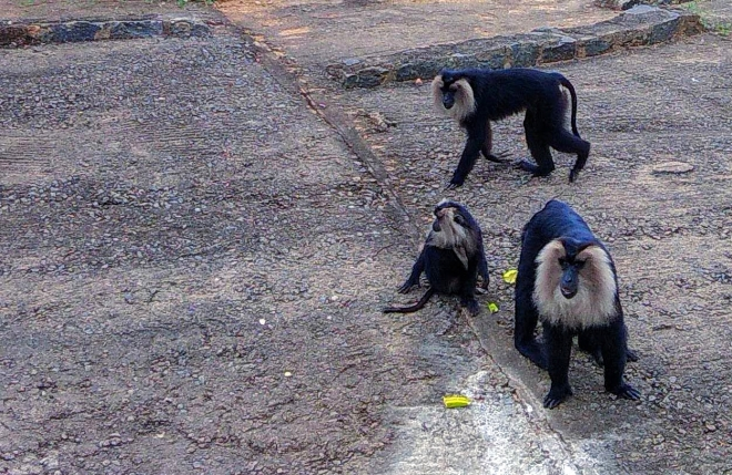 The Wilderness - A picture of Loitering Monkeys