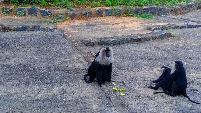 The Wilderness - A picture of Monkeys having family time